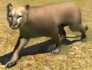 Southern-south-american-cougar-zootycoon3