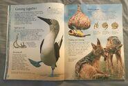 The Usborne World of Animals (8)