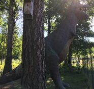 Tyrannosaurus-rex-boraszoo