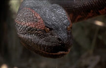 Anaconda (Anaconda film)