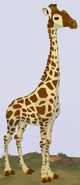 Angolan Giraffe WOZ