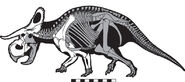 Nasutoceratops skeleton