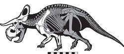 Nasutoceratops skeleton.jpg