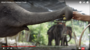 Science Insider Asian Elephants