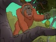 TWT Orangutan