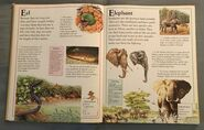 The Kingfisher First Animal Encyclopedia (25)