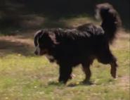 Animal Show Dog