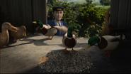 TTTE Ducks