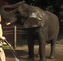 WMSP Elephant