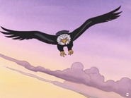 Eagle, Bald (Little Bear)