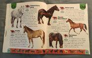 Horse Dictionary (6)