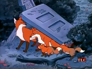 MSB Foxes