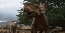 Pachyrhinosaurus.jpg