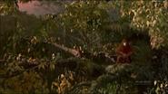 Pandavision orangutan