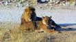 UTAUC Lions 3