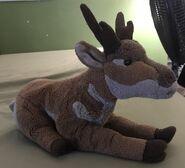 Alex the Pronghorn Antelope