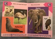 Alligator to Zebra ABC's- Learning Your ABC's with Animals (5)