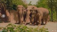 Animal Atlas Asian Elephants