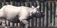 Buffalo Zoo Indian Rhinoceros