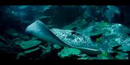 Oceans 2010 Stingray
