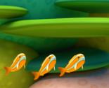 Orange cardinalfish