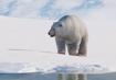 Polar-bear-planet-zoo