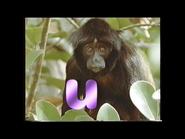 U is for Uakari