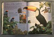 Birds (Eye Wonder) (9)
