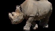 Black Rhino (No Background)