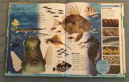 DK First Animal Encyclopedia (69)