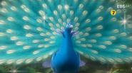 Gon Peacock