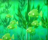 Kelp snapper
