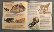 My First Book of Animals from A to Z (4)