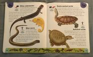 Reptiles and Amphibians Dictionary (22)