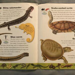 Reptiles and Amphibians Dictionary (22).jpeg