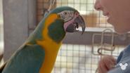 TMODAK Macaw