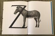 Animal Alphabet (Bert Kitchen) (15)