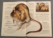 Desert Animals (Over 100 Questions and Answers to Things You Want to Know) (9)
