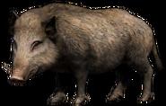 FC4 Animal (9)