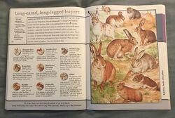 Fantastic World of Animals (80).jpeg