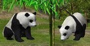 Giant-panda-wildlife-park-2