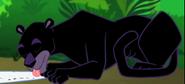 MAD Black Leopard
