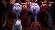 Reggie jenny turkeys