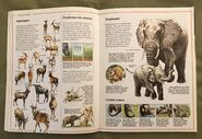 Usborne World Wildlife- Grassland Wildlife (3)
