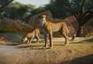 Cheetah-planet-zoo