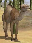 Dromedary-camel-wildlife-park-2