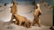 Rolling Hills Zoo Polar Bears