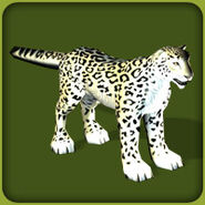 Snow Leopard (Blue Fang)