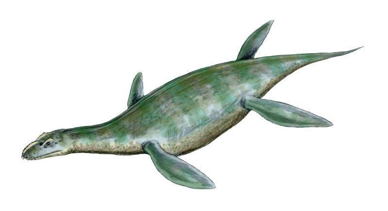 Umoonasaurus