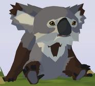Victorian Koala WOZ